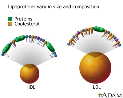 HDL and LDL